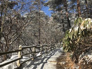 雪の山道の写真・画像素材[1081583]