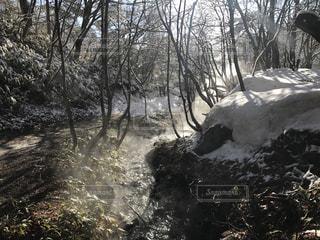 近くの雪を被りの森の写真・画像素材[1081584]