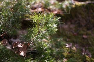 森林の写真・画像素材[386592]