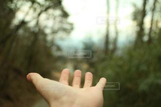 自然の写真・画像素材[406287]