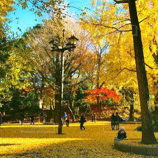 公園の写真・画像素材[377343]