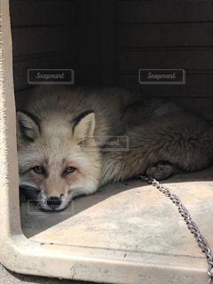 動物の写真・画像素材[499658]