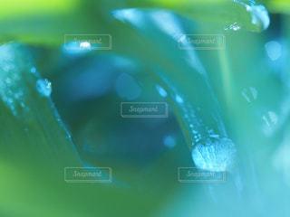 自然の写真・画像素材[387618]
