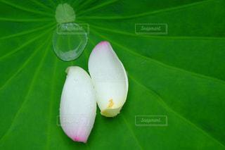 花の写真・画像素材[378874]
