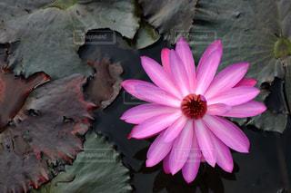 花の写真・画像素材[378886]
