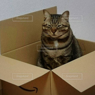 猫の写真・画像素材[379308]
