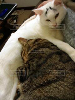 猫の写真・画像素材[379310]