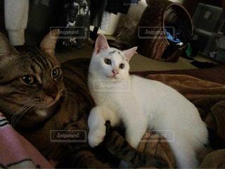 猫の写真・画像素材[379311]