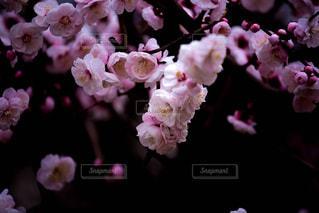 自然の写真・画像素材[382299]