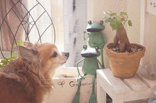 犬の写真・画像素材[382366]