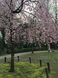 春 - No.408430