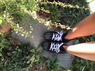 花の写真・画像素材[449105]