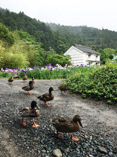 水の中の鳥を見ている人々 のグループ - No.715246