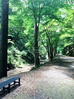 森の横にある空の公園ベンチの写真・画像素材[715249]