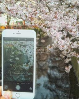 春の写真・画像素材[383541]