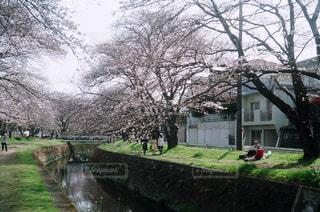 風景 - No.436123