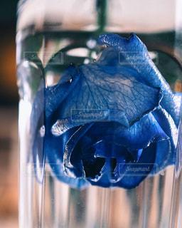 花の写真・画像素材[601569]