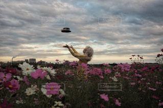 曇りの日にピンクの花の写真・画像素材[790200]