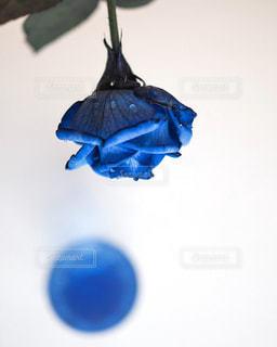 青い空を飛んでいる鳥の写真・画像素材[790230]