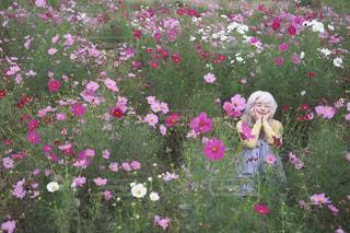ピンクの花が庭園にの写真・画像素材[815120]