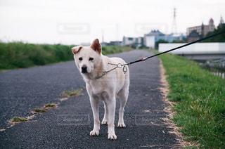 犬の写真・画像素材[837870]