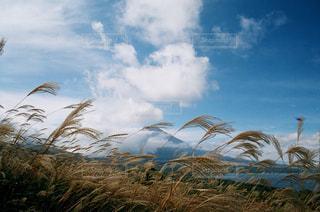曇りの日でヤシの木のグループの写真・画像素材[875215]
