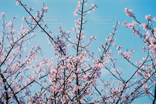 木の枝にとまった鳥の写真・画像素材[979670]