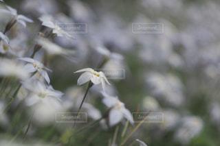 近くの花のアップの写真・画像素材[979671]