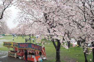 バック グラウンドで高公園と公園の大きな木の写真・画像素材[979688]