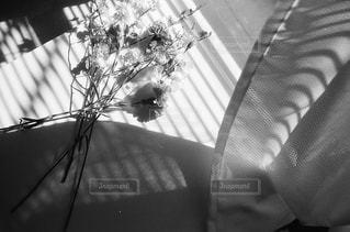 近くの花のアップの写真・画像素材[985964]