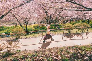 桜並木を歩いている女性の写真・画像素材[1057321]