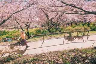 桜並木の下を走っている女性の写真・画像素材[1057322]