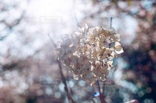 近くの花のアップの写真・画像素材[1057326]