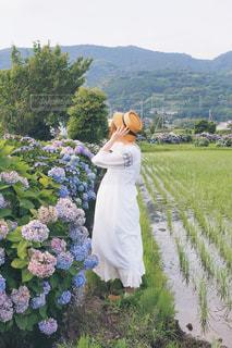 紫陽花と田んぼと女の子の写真・画像素材[1314648]