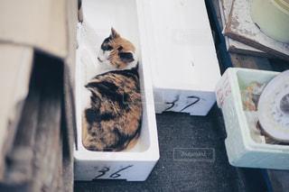 発泡スチロールの箱に入った猫の写真・画像素材[1320102]