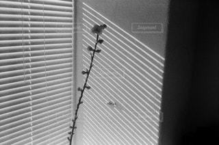 窓のクローズアップの写真・画像素材[2798812]