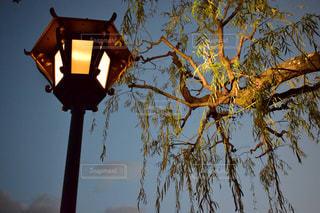 夜の写真・画像素材[379884]