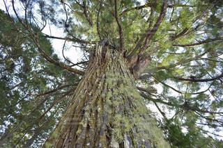 木の写真・画像素材[379914]