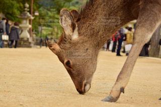 動物の写真・画像素材[381400]