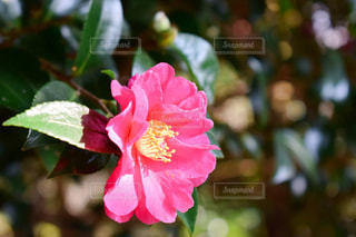 花の写真・画像素材[381439]