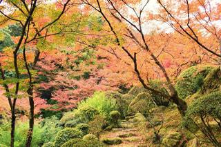 秋の写真・画像素材[381713]
