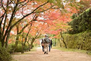 秋の写真・画像素材[381736]