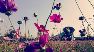 花の写真・画像素材[381797]