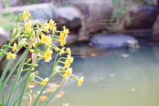 自然の写真・画像素材[390113]
