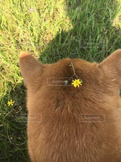 犬の写真・画像素材[379574]