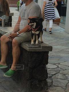 犬 - No.379625