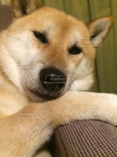 No.379647 犬