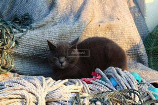 港の猫の写真・画像素材[1076302]