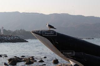 クジラとカモメの写真・画像素材[1080724]