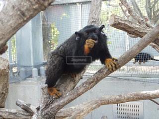 No.395884 猿